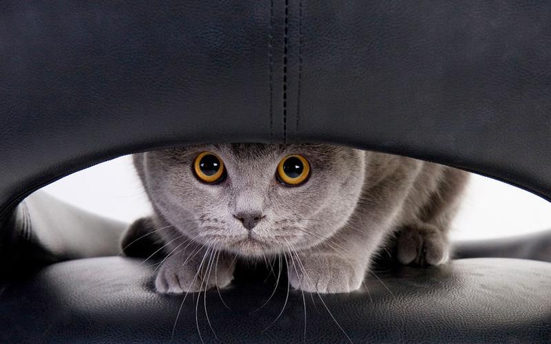 как вывести пятно от кошачьей мочи с ковра